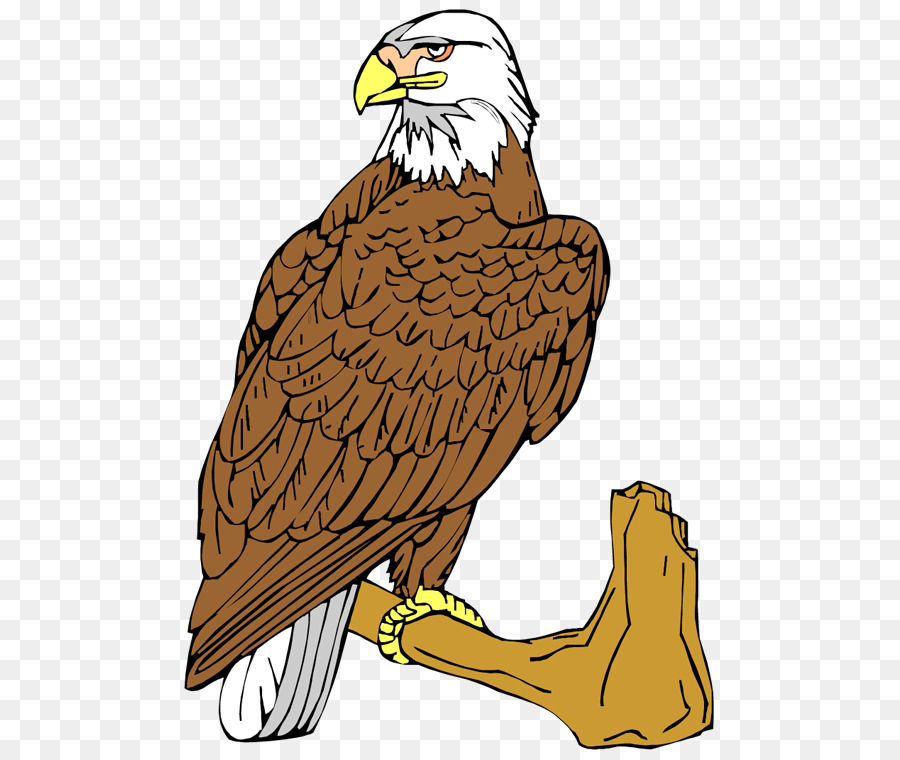 Eagle Cartoon clipart.