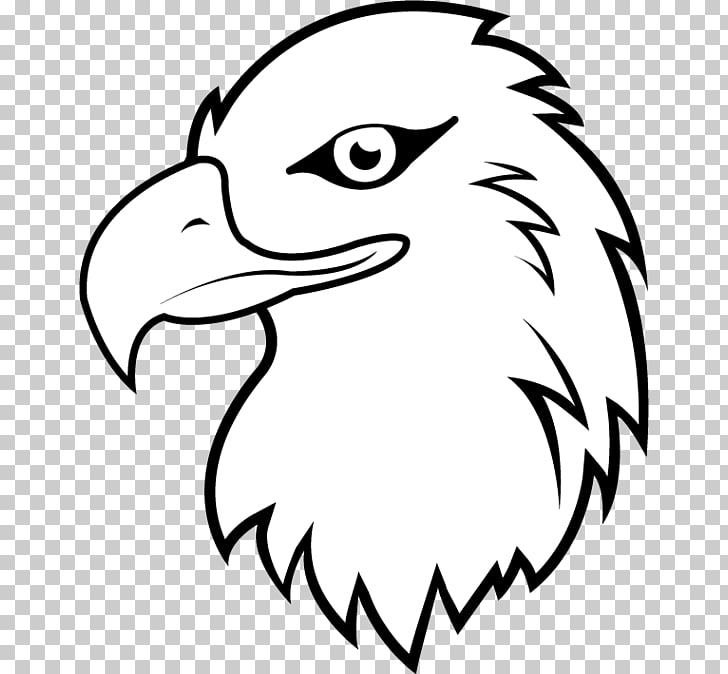 Bald Eagle White.