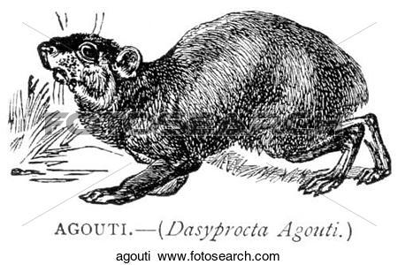 Clip Art of Mammals.