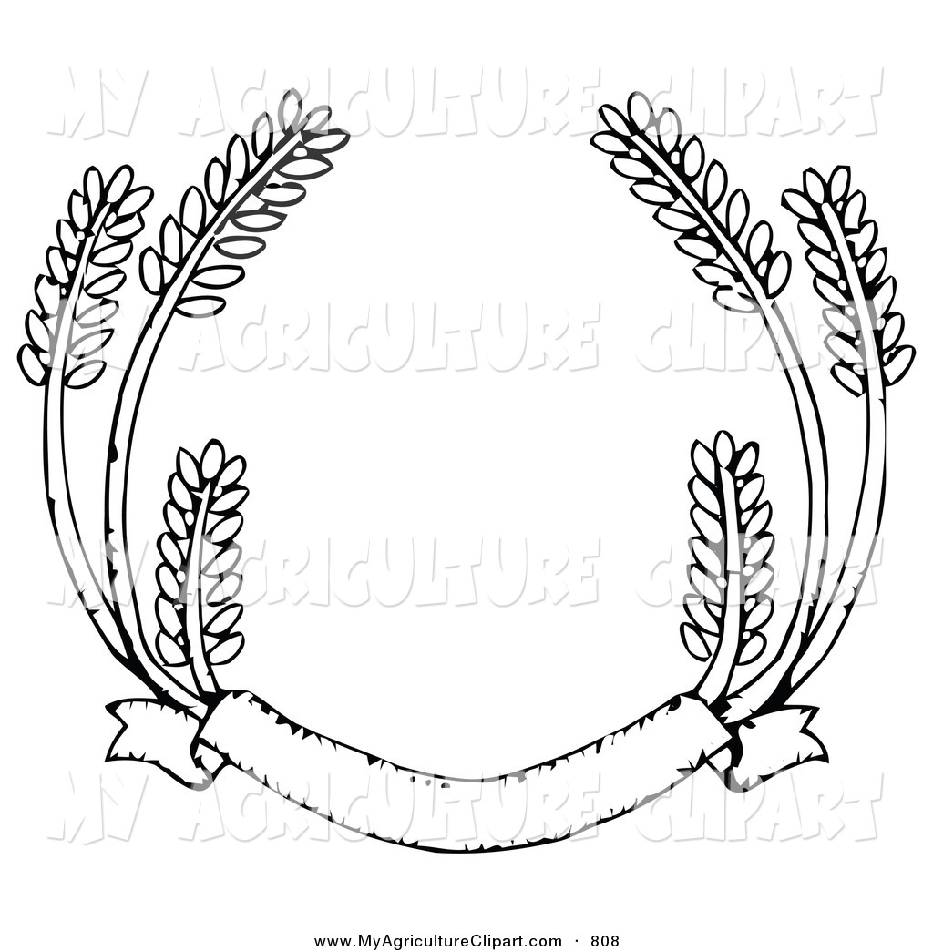 Royalty Free Stock Agriculture Designs of Whole Grains.