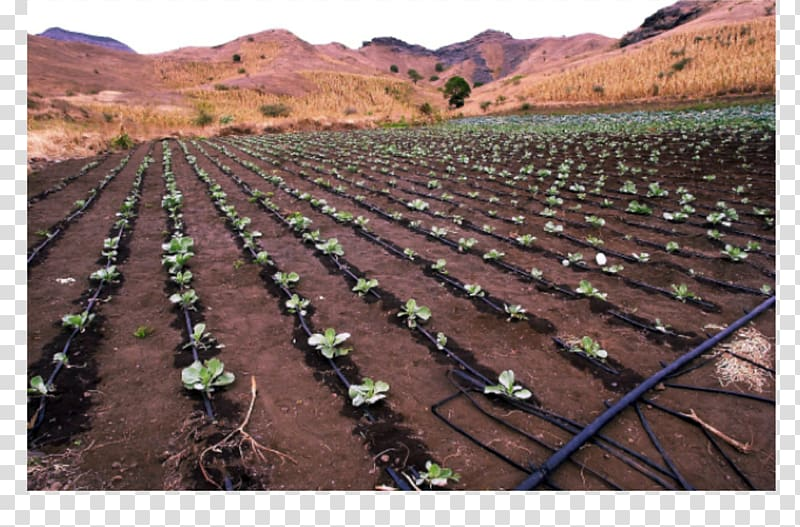 Farm Drip irrigation Agriculture Garden watering systems.