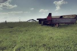 免费照片: 浇水的牲畜, 牛小牛, 药水, 阿尔姆, 水, 海槽, 饮水槽.