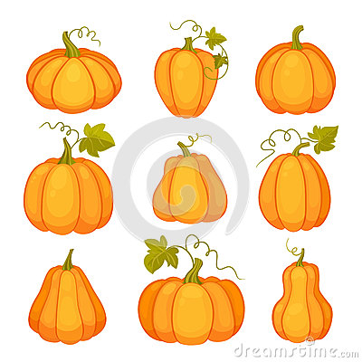 Agricultural Plant On White Background. Orange And Yellow Pumpkins.
