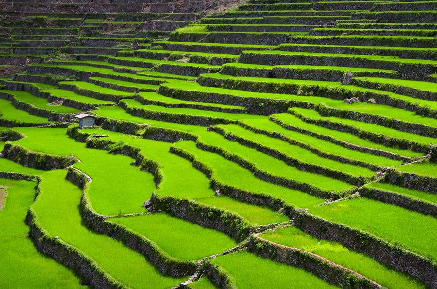 Banaue Rice Terraces Clipart.