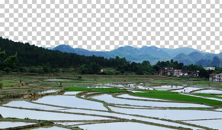 Paddy Field Arable Land Terrace Agriculture PNG, Clipart.