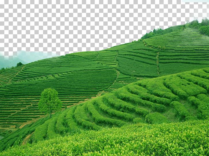 Mount Scenery Terrace Arable land, Terraced fields PNG.