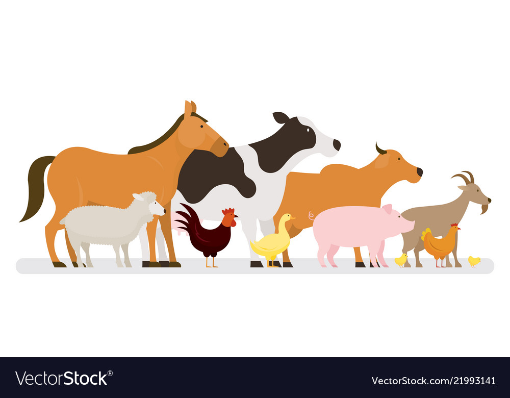 Group of farm animals side view.
