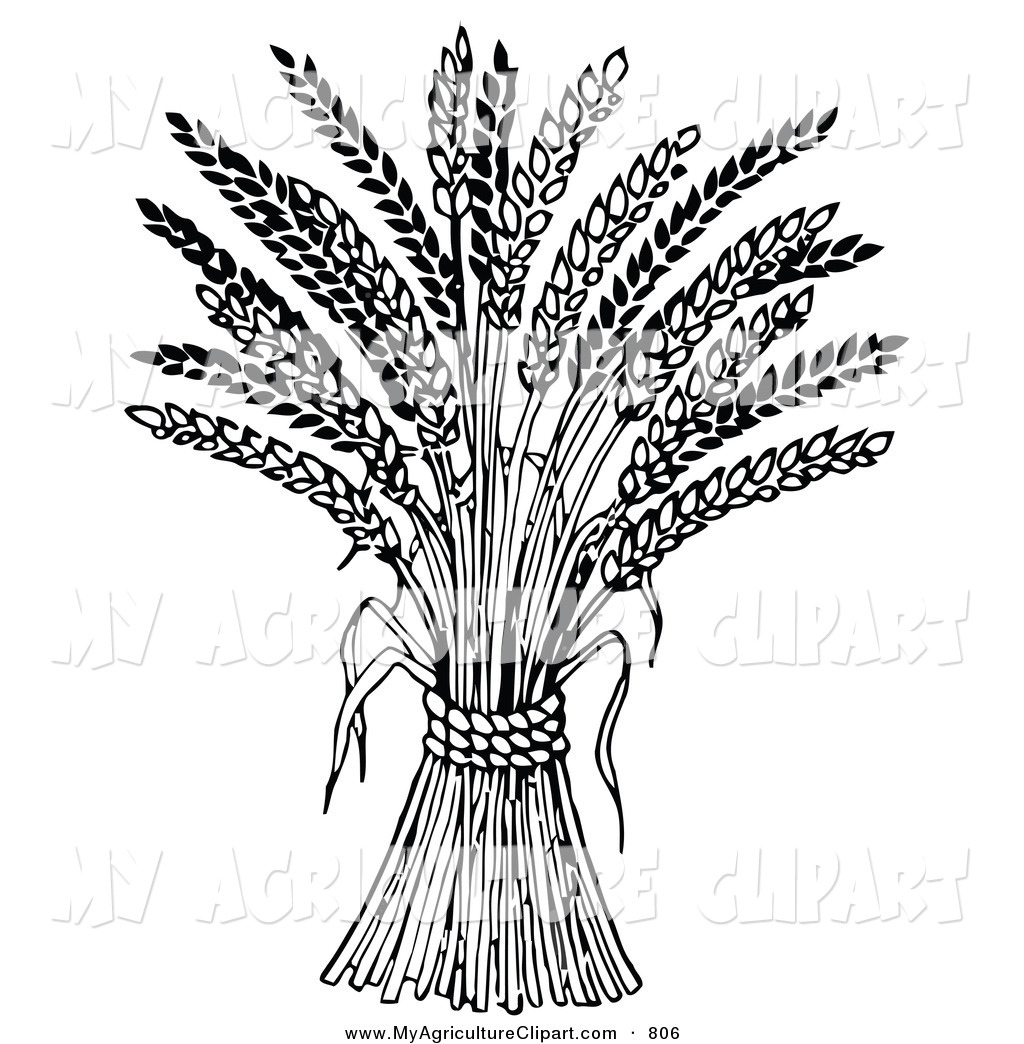 Vector Agriculture Clipart of a Wheat Bound by Rope over White by.