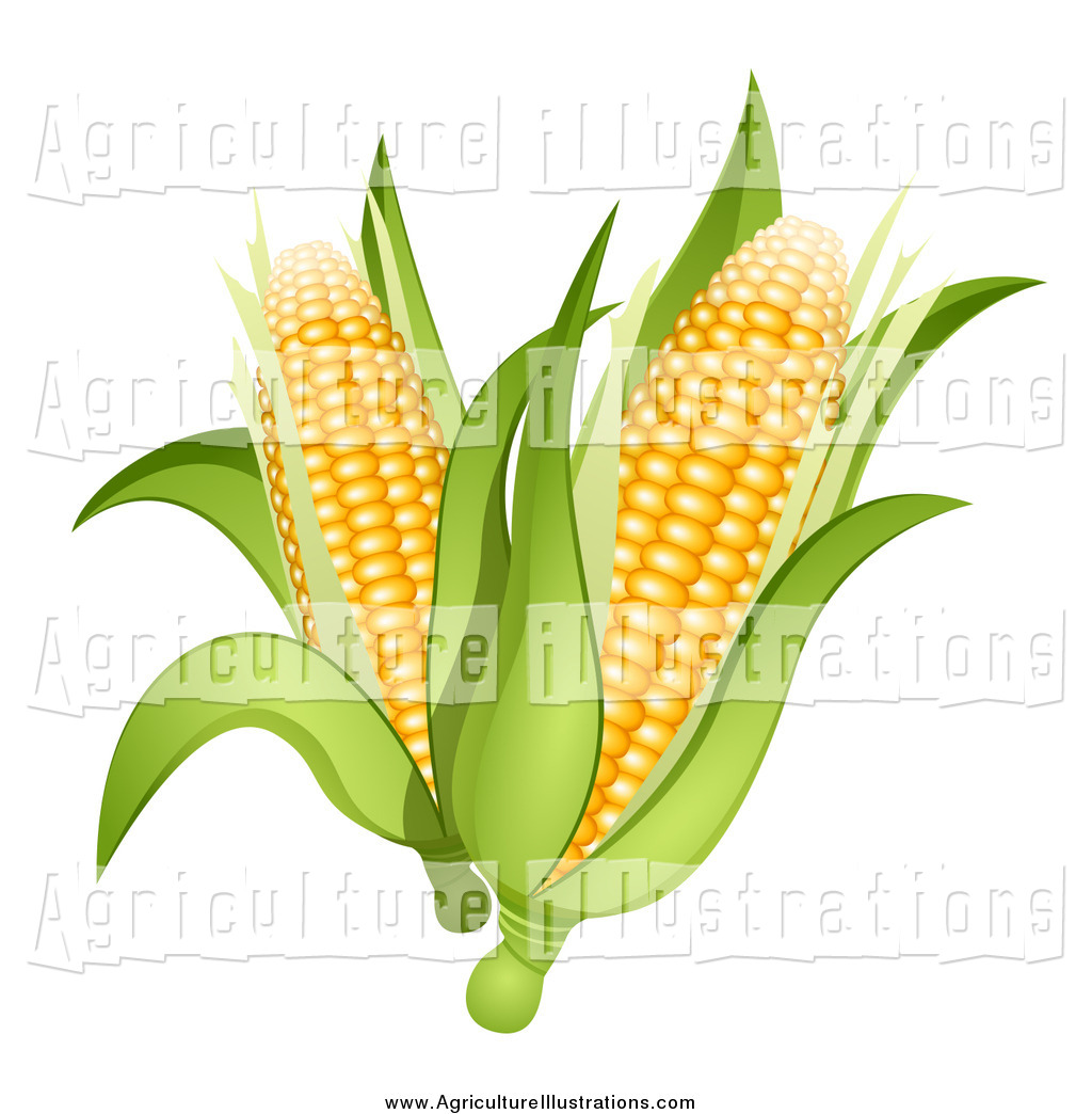 Agriculture Clipart of 3d Ears of Corn Cobs by Oligo.