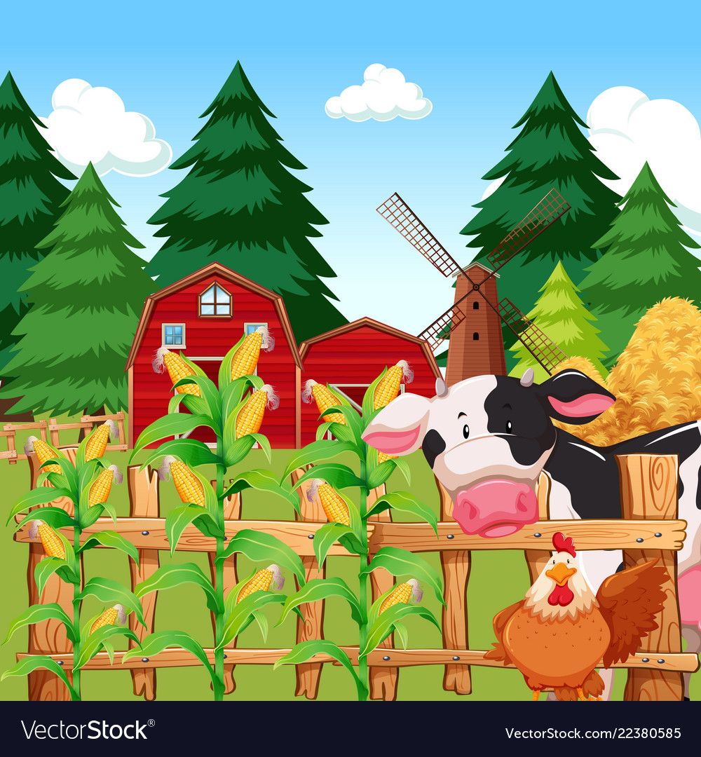 A corn farm with animals.