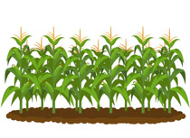 Agriculture clipart, Agriculture Transparent FREE for.