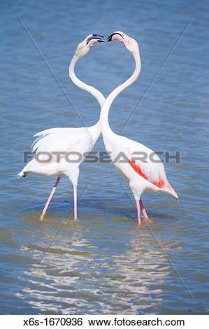 Stock Images of Flamingos in Natural park of Aiguamolls de l.