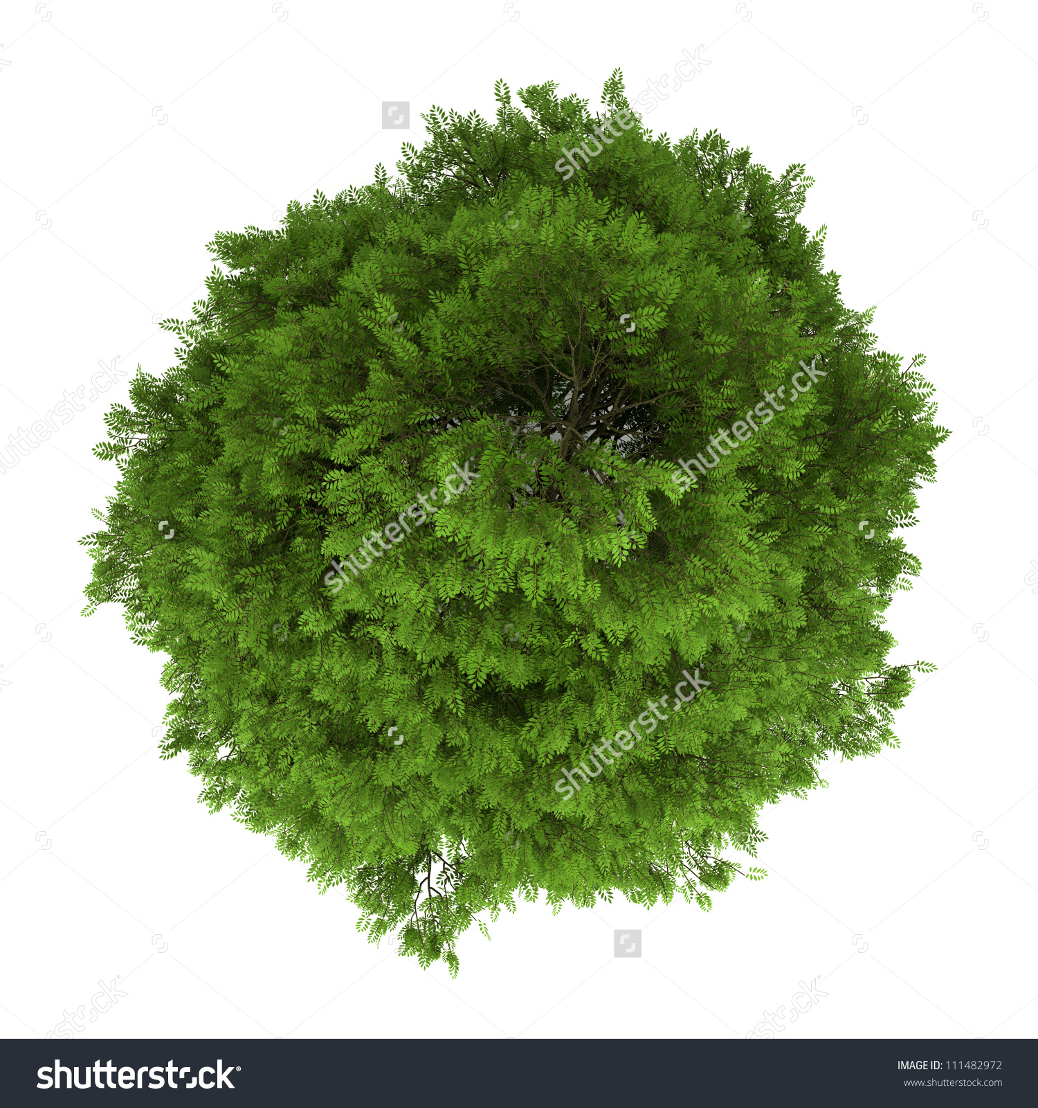Top View Tree Heaven Isolated On Stock Illustration 111482972.