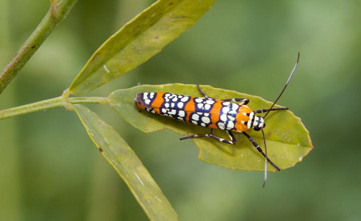 Maryland Biodiversity Project.