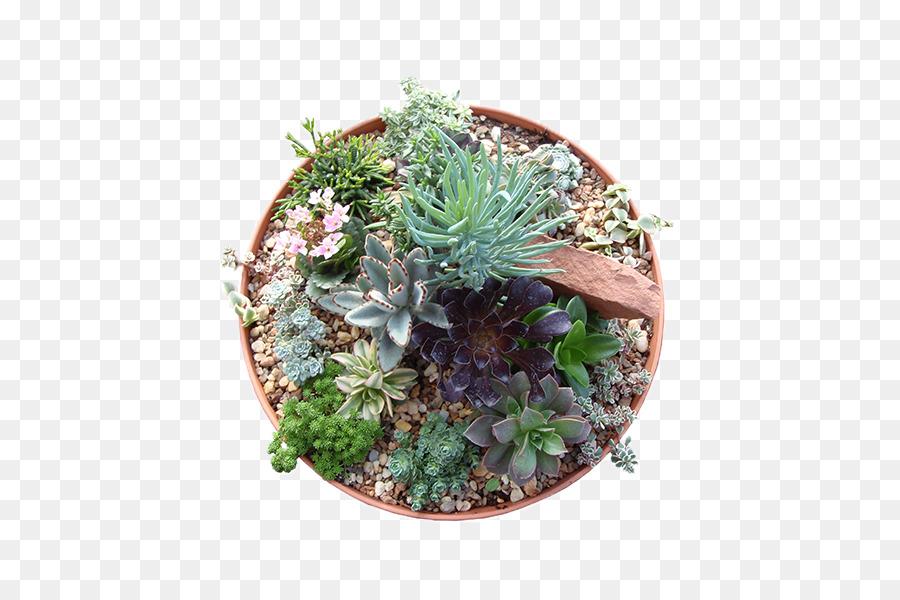 Cactus Cartoon.