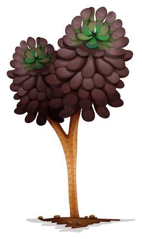 A voodoo aeonium plant.