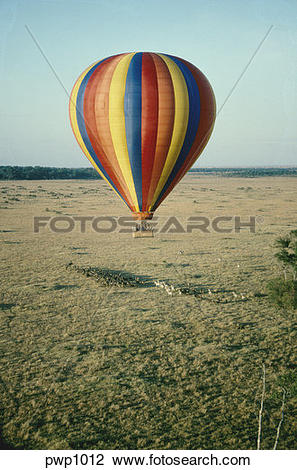 Stock Photo of Hot air balloon floating over a herd of zebra and.