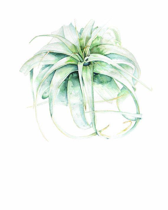 Watercolor Print Air Plant Succulent Print by.