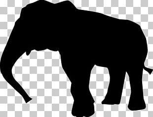 Indian Elephant African Elephant Surin Province White.