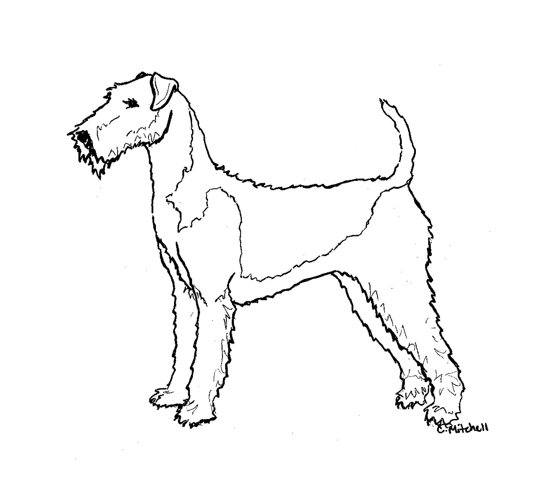 Free Airedale Terrier Cliparts, Download Free Clip Art, Free.