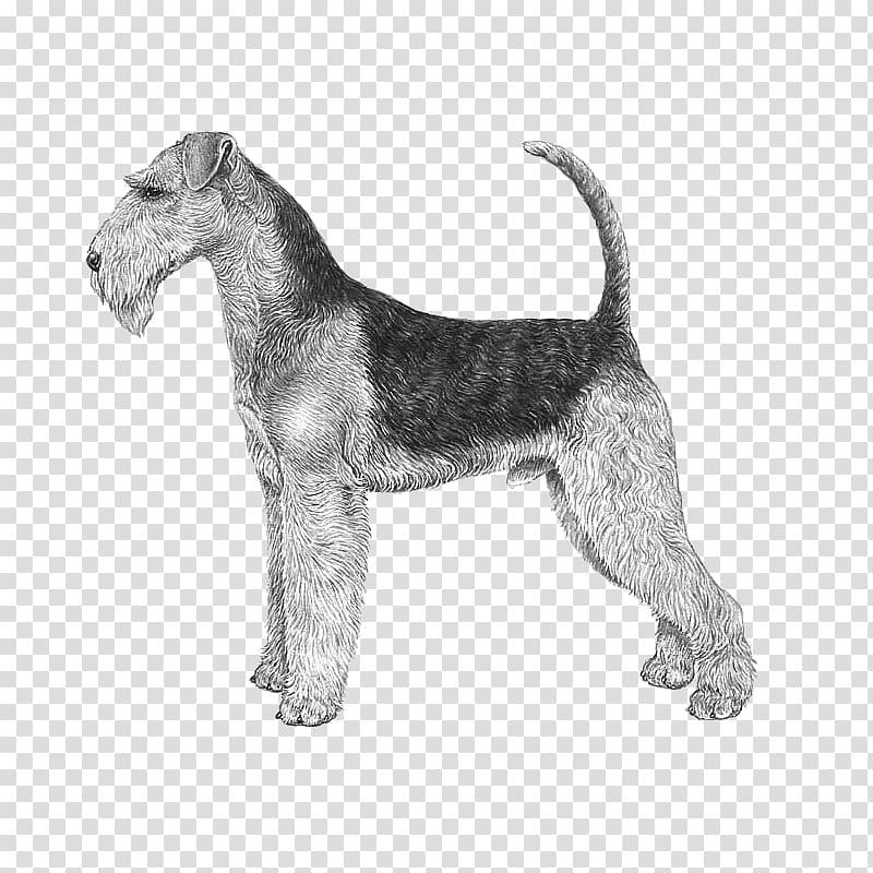 Airedale Terrier Jack Russell Terrier Bedlington Terrier.