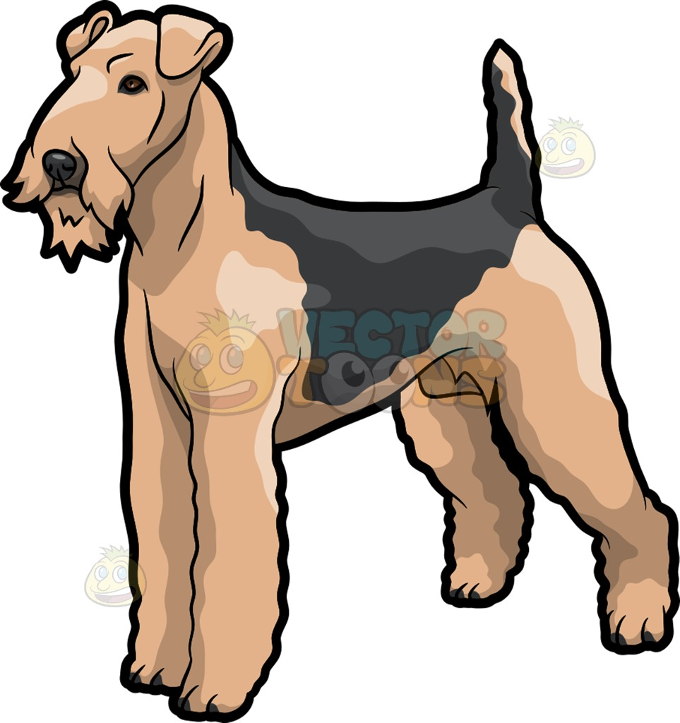 An Airedale Terrier Pet Dog With A Good Form Cartoon Clipart.
