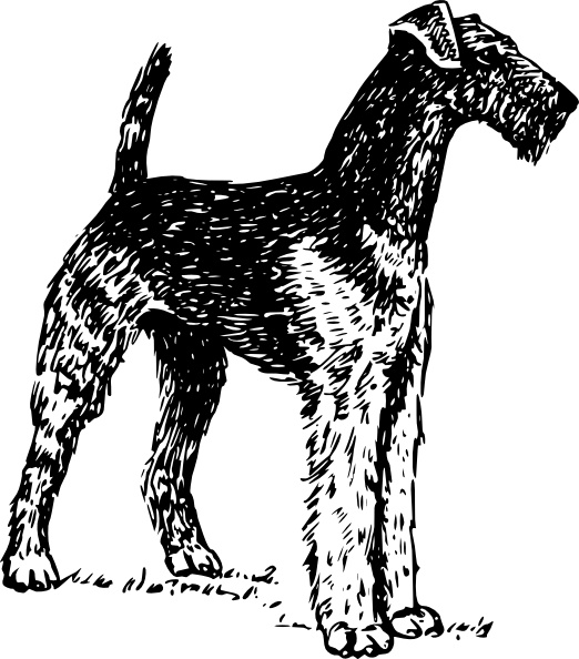 Airedale clip art Free vector in Open office drawing svg ( .svg.