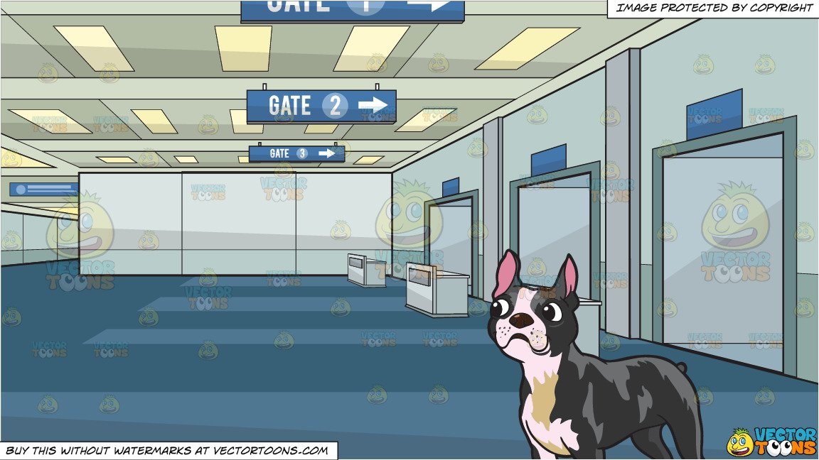 A Cute Boston Terrier and Airport Departure Gate Background.