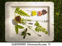 Coleus Stock Photo Images. 605 coleus royalty free images and.