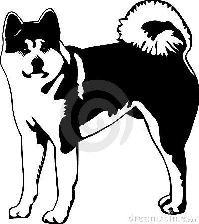 Akita Dog Stock Illustrations.