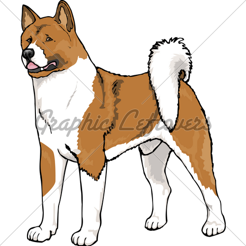 Akita Male · GL Stock Images.