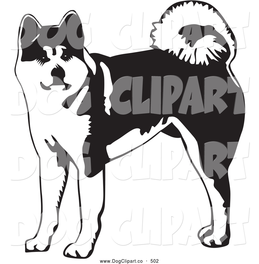 Vector Clip Art of a Cute Alert Akita Dog with a Curled Tail.