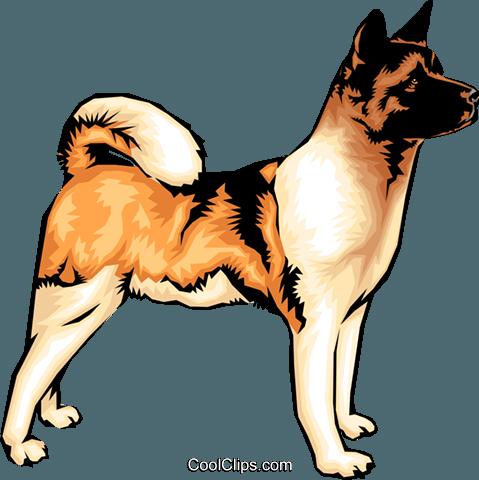 Akita dog Royalty Free Vector Clip Art illustration.