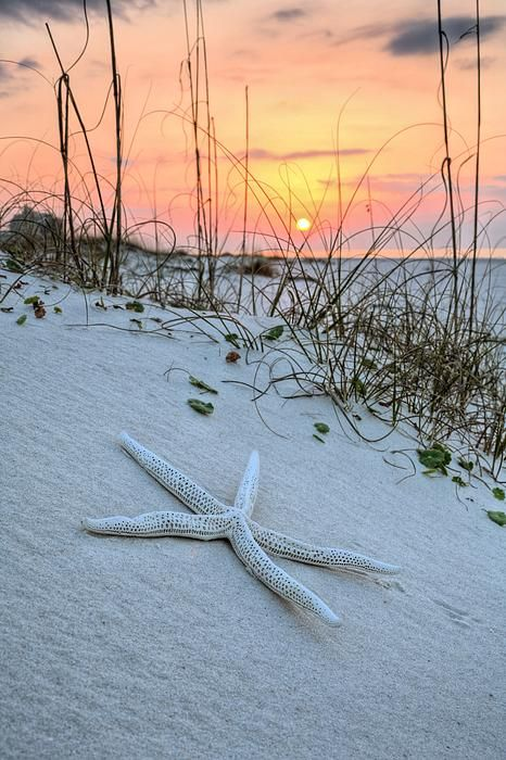 1000+ ideas about Orange Beach on Pinterest.