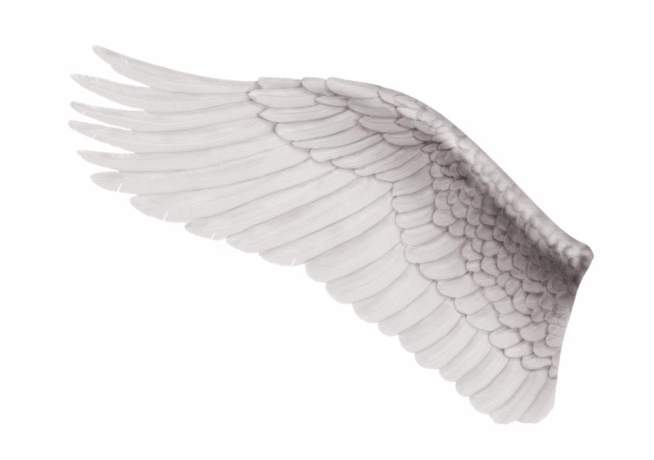 Ala De Angel Izquierda , Png Download.