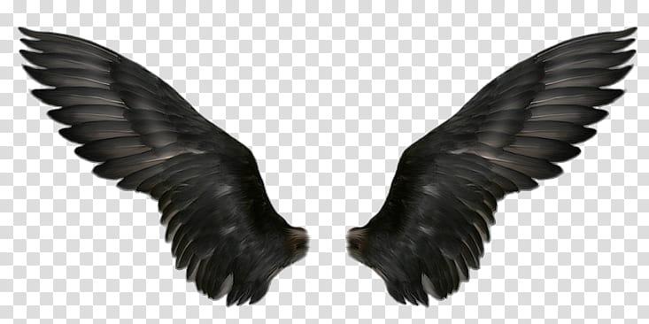 Recursos Alas De Angel , black wings transparent background PNG.