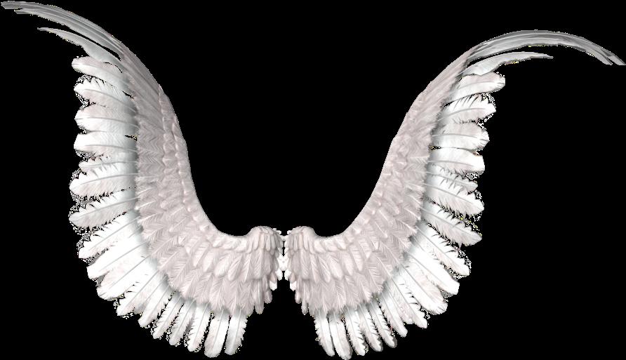 HD Wings Photo Editing, Tumblr Png, Angel Wings, Image.
