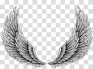 Alas Angel transparent background PNG clipart.