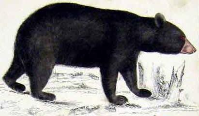 Bear clipart kids.