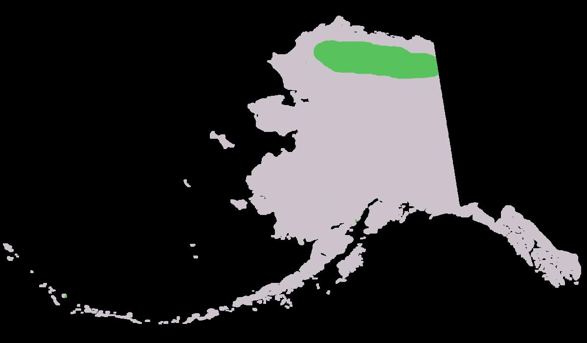 Alaska marmot.