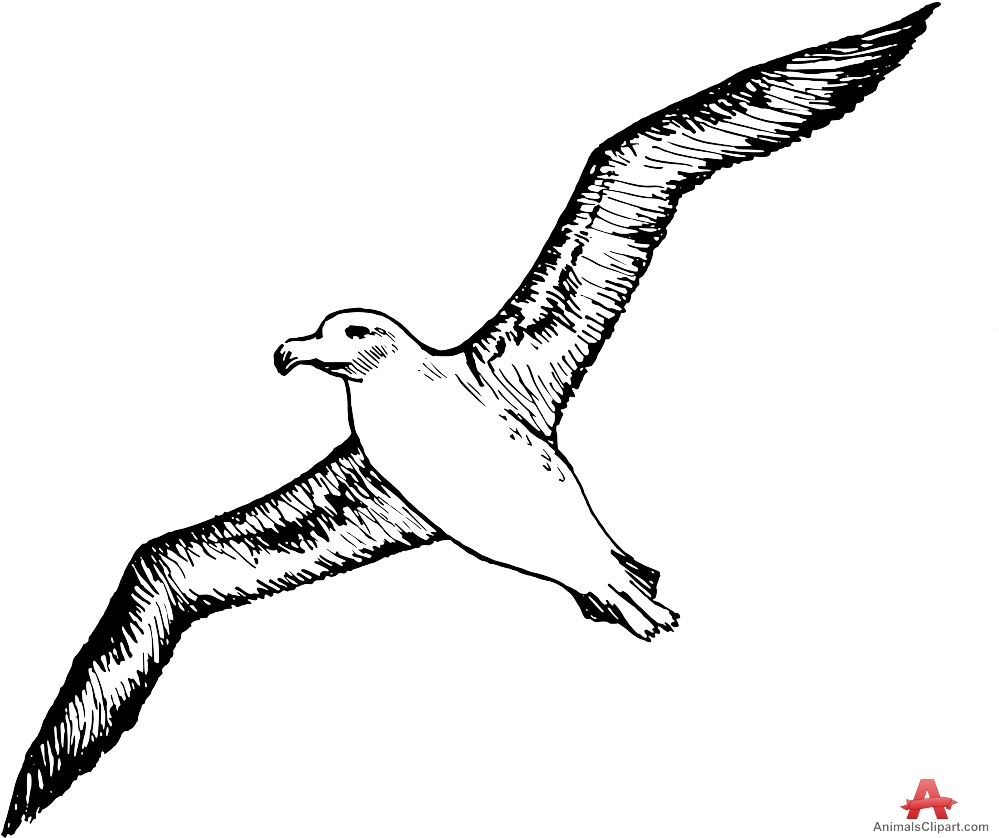 Albatross Sea Bird Flying Clipart.