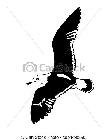 Albatross Illustrations and Stock Art. 341 Albatross illustration.