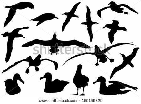 Albatross Bird Stock Photos, Royalty.