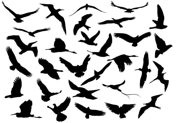30 Flying Birds.