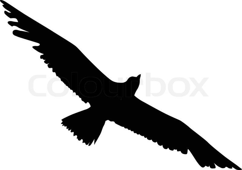 Silhouette of an albatross.