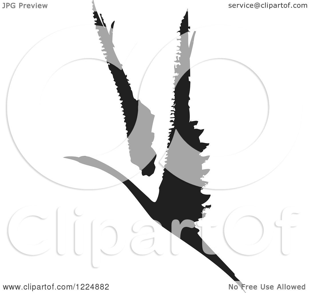 Clipart of a Black and White Ink Flying Swan or Albatross.