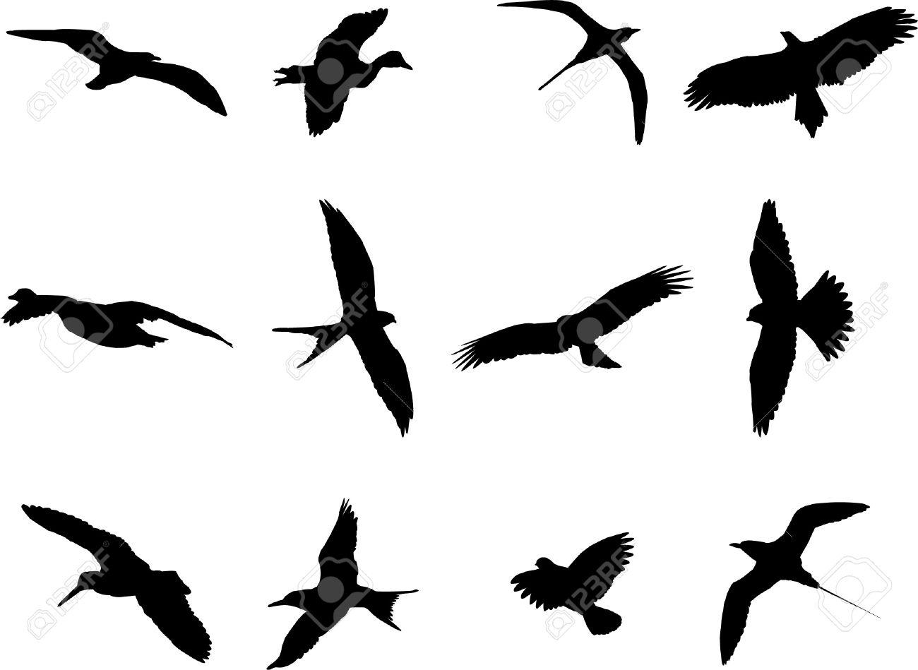 427 Albatross Stock Vector Illustration And Royalty Free Albatross.