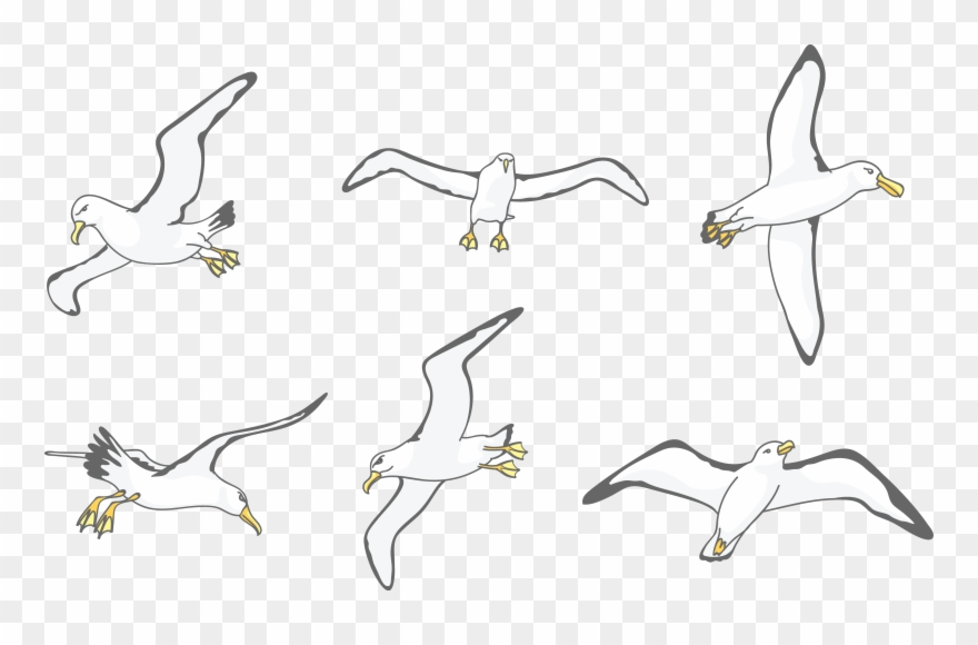 Download Albatross Drawing Wing.