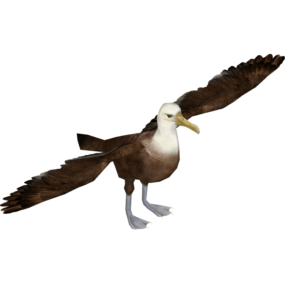Albatross PNG Image with Transparent Background.