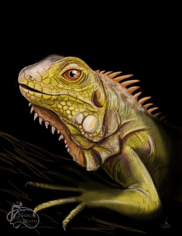 1000 Images About Iguana On Pinterest